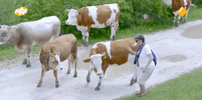 Problemen in de trant van: koeien op het pad